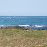 Millenari di Puglia, gli appuntamenti di domenica 21 settembre