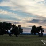 Gli appuntamenti del prossimo week-end con i Millenari di Puglia