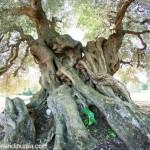 Le escursioni con i Millenari di Puglia fino al 2 giugno