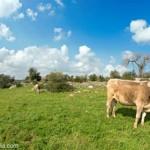 Le escursioni dei Millenari di Puglia dal 5 al 9 agosto