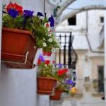 Balconi fioriti: la premiazione nel fine settimana