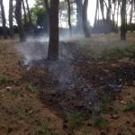 Principio di incendio nella pineta Basile Caramia