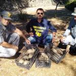 sequestro tartarughe crispiano forestali