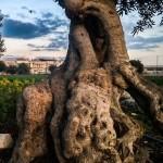 Gli scatti del Liceo Artistico Luigi Russo al Torneo del Paesaggio del FAI