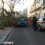 Raffiche di vento, cade albero in Via Mercadante. Strada bloccata