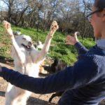 Adottiamo i cani del canile di Martina Franca