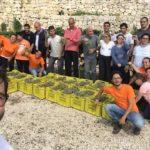 Al via il protocollo Sperimentale di Microvinificazione delle uve raccolte sulle terrazze di Locorotondo