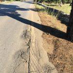Locorotondo: pubblicata l'ordinanza per il taglio di radici e ramificazioni su strade comunali