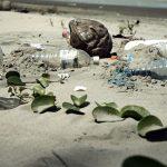 Giornata mondiale degli oceani: ogni minuto finisce in mare un camion di rifiuti di plastica