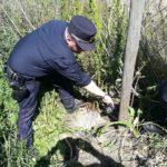 Carabinieri forestali fermano un bracconiere tra Ostuni e Martina Franca