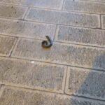 Si stacca un pezzo di ferro  della ringhiera del Palazzo Ducale. Nessun ferito